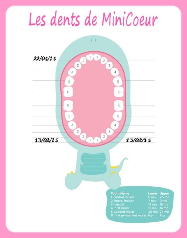 ordre dents lait bébé